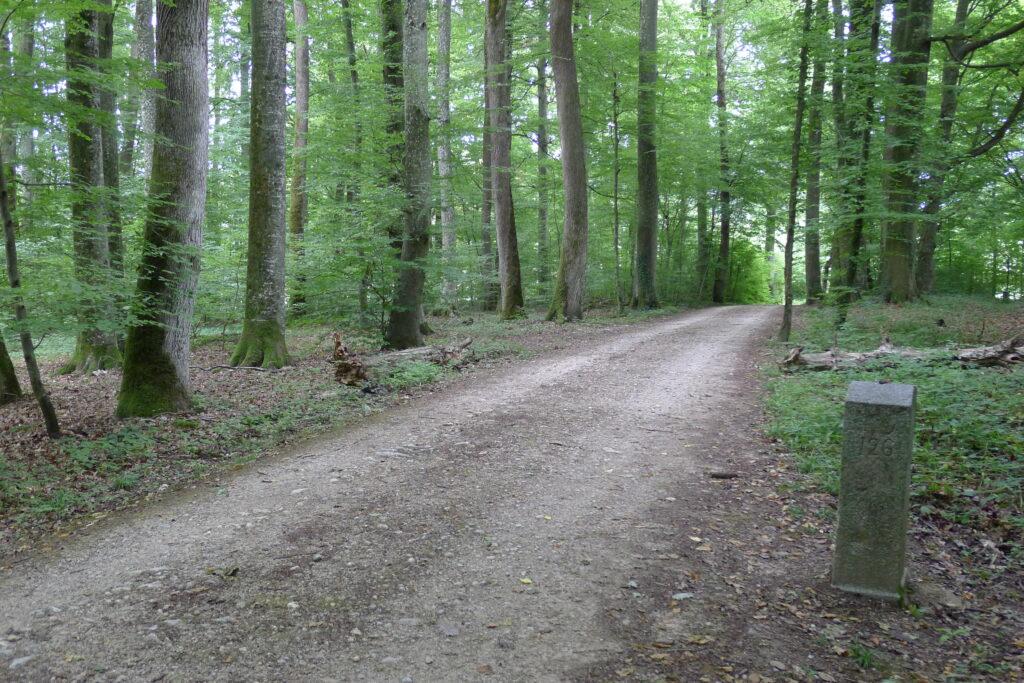 Zwischen Grenzstein 126 und Grenzstein 109 (am Rande des Waldes links) liegen nur 69 Meter. | © Regula Vogt-Kohler