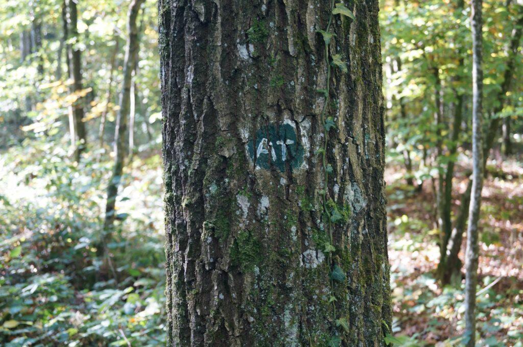 Die Bäume, bei denen die Asche eines Menschen beigesetzt wurde, sind für die Angehörigen mit einem Buchstabencode identifizierbar.   © Detlef Kissner